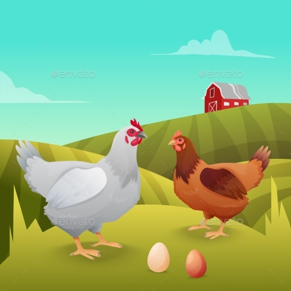 GraphicRiver Hens Standing on Grass with Farm Background 11184835