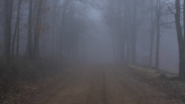 Stock Footage Videos Scary Foggy Forest Road Stock