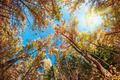 treetops in the autumn forest - PhotoDune Item for Sale