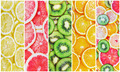 citrus-fruit slices fresh - PhotoDune Item for Sale
