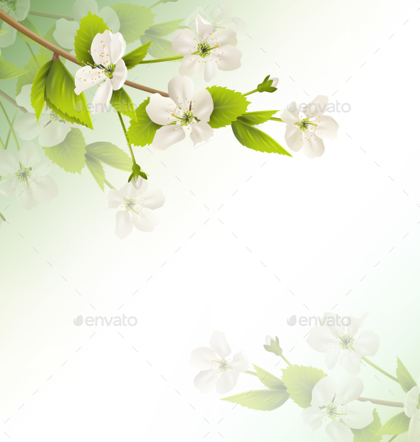 GraphicRiver White Cherry Flowers 11199652