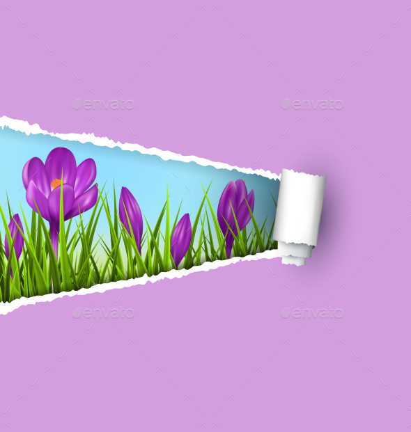 GraphicRiver Violet Crocuses and Ripped Paper Sheet 11199766