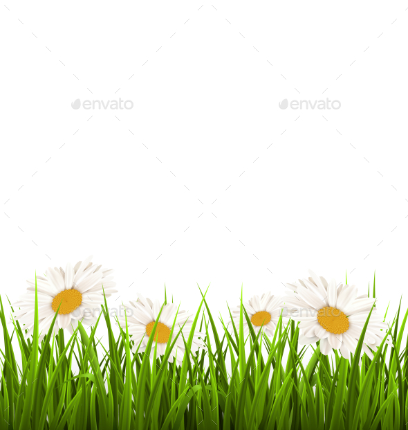 GraphicRiver Green Grass Lawn with White Chamomiles 11199842
