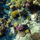 red sea underwater coral reef - PhotoDune Item for Sale