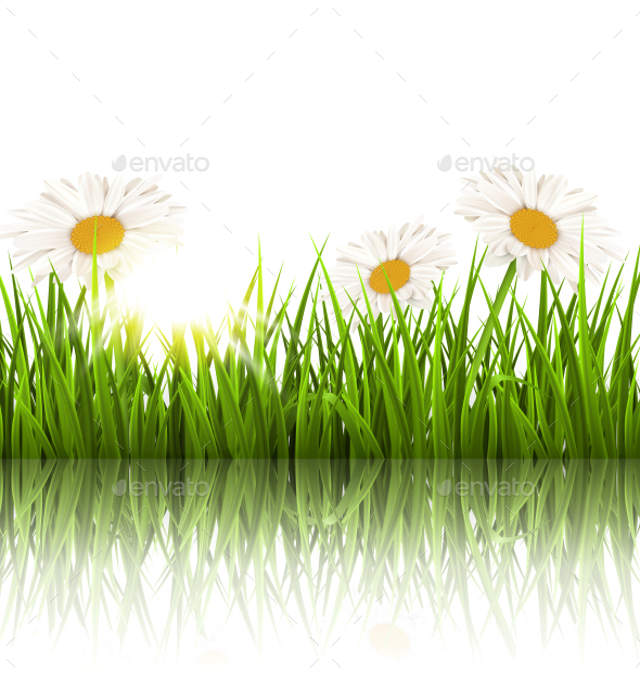 GraphicRiver Grass Lawn with White Chamomiles and Reflection 11200293