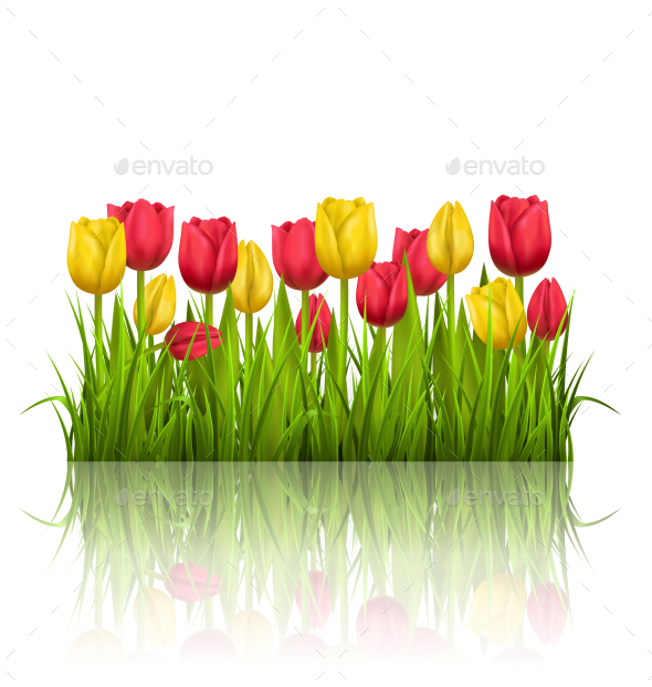 GraphicRiver Yellow and Red Tulips and Reflection 11200325