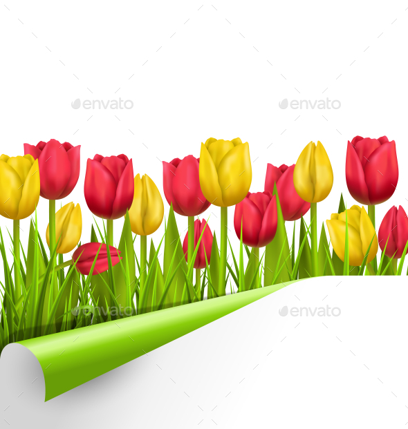 GraphicRiver Yellow and Red Tulips and Wrapped Paper Sheet 11200536
