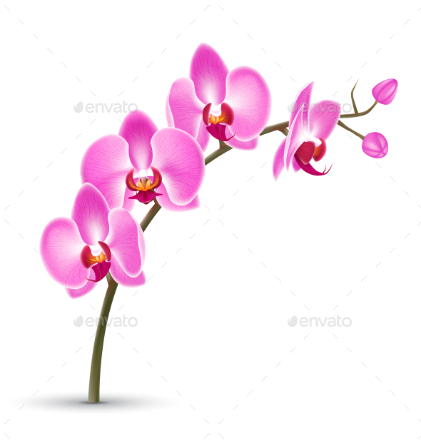 GraphicRiver Branch of Pink Orchid Isolated on White Background 11200575