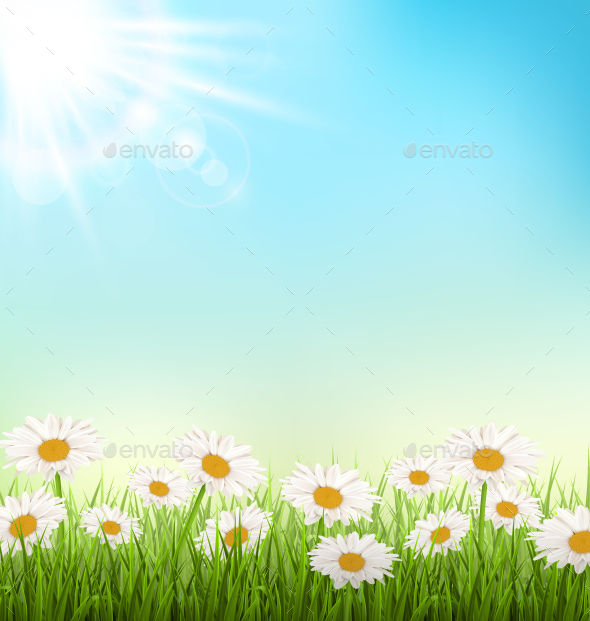 GraphicRiver White Chamomiles and Sunlight on Sky Background 11200580