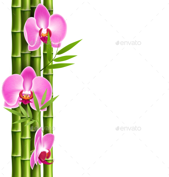 GraphicRiver Orchid Pink Flowers with Bamboo Isolated on White 11200618