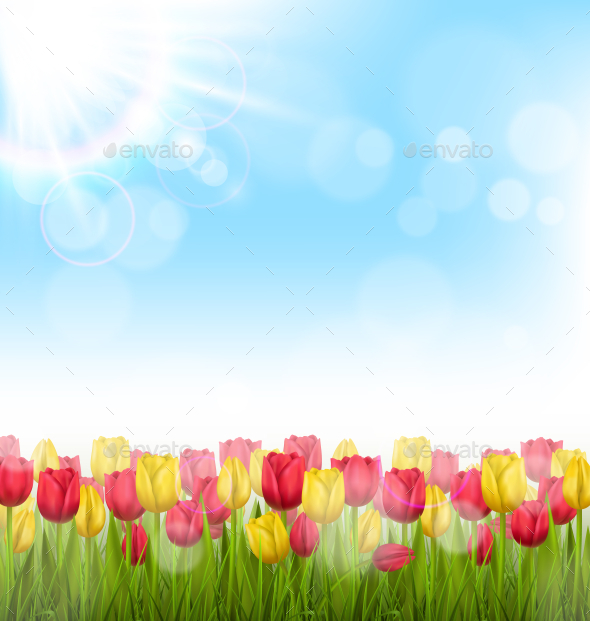 GraphicRiver Yellow and Red Tulips and Sunlight on Blue Sky 11200665