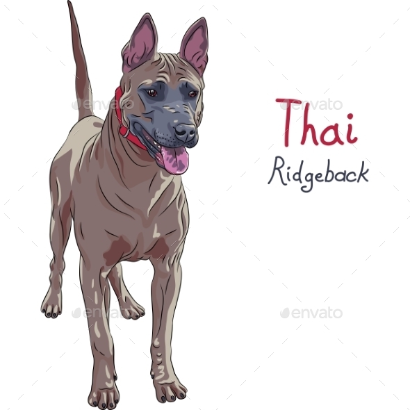 GraphicRiver Thai Ridgeback Dog Breed 11203200