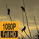 Birds in Danube Delta - VideoHive Item for Sale