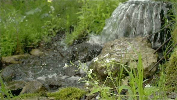 A Stellaria Flower Near the Lake