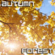 Autumn Tree in Sun Beams - VideoHive Item for Sale