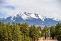 landscape with Humphreys Peak Tallest in Arizona - PhotoDune Item for Sale