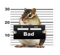 mugshot background with rodent, bad animal concept - PhotoDune Item for Sale
