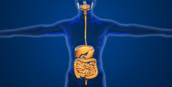 effect of alpha galactosidase on digestive system Home / digestive enzymes / glossary of enzymes, benefits and food sources the body's digestive system cannot alpha-galactosidase is an enzyme that breaks.