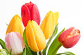 Fresh colorful tulips flowers isolated on white - PhotoDune Item for Sale