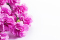 Pink soft spring flowers bouquet on white background - PhotoDune Item for Sale
