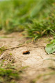 Insect on the ground - PhotoDune Item for Sale