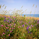 Wildflowers in summer meadow - PhotoDune Item for Sale