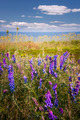 Wildflowers on Prince Edward Island - PhotoDune Item for Sale