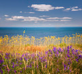 Wildflowers and ocean - PhotoDune Item for Sale