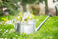Spring garden - PhotoDune Item for Sale