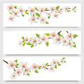 Three sakura branches banners. - PhotoDune Item for Sale