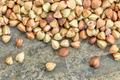 buckwheat grain background - PhotoDune Item for Sale