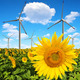 Sunflower field with wind turbines - PhotoDune Item for Sale