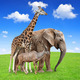 Giraffe with elephant and kudu - PhotoDune Item for Sale
