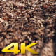 Walking over Leaves in the Forest - VideoHive Item for Sale