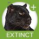 Extinct Loop