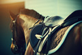 Saddle with stirrups on a back of a horse  - PhotoDune Item for Sale