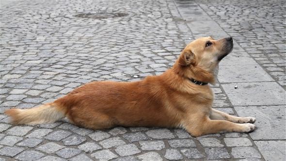 Dog in Street Leaving