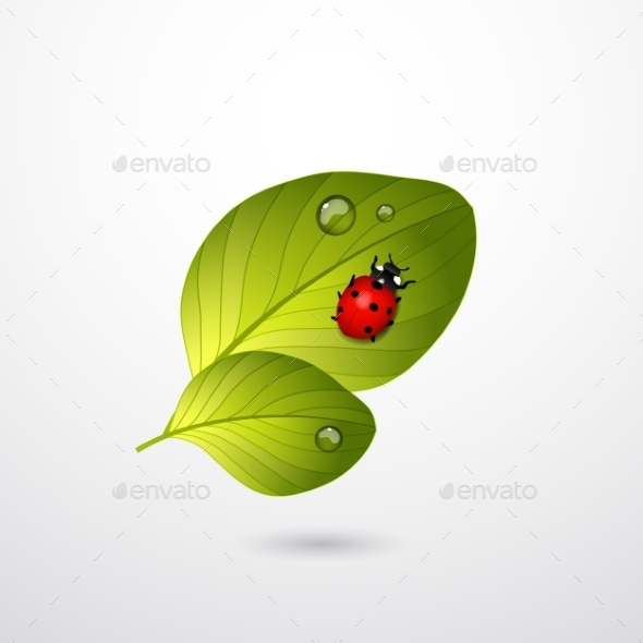 GraphicRiver Two Green Leaves with Red Lady Bug 11228749