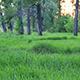 Summer Forest Landscape At Sunset - VideoHive Item for Sale