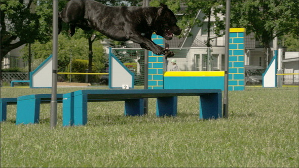 A Black Dog Jumping Over Three Obstacles