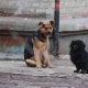 Two Homeless Dogs Sitting - VideoHive Item for Sale