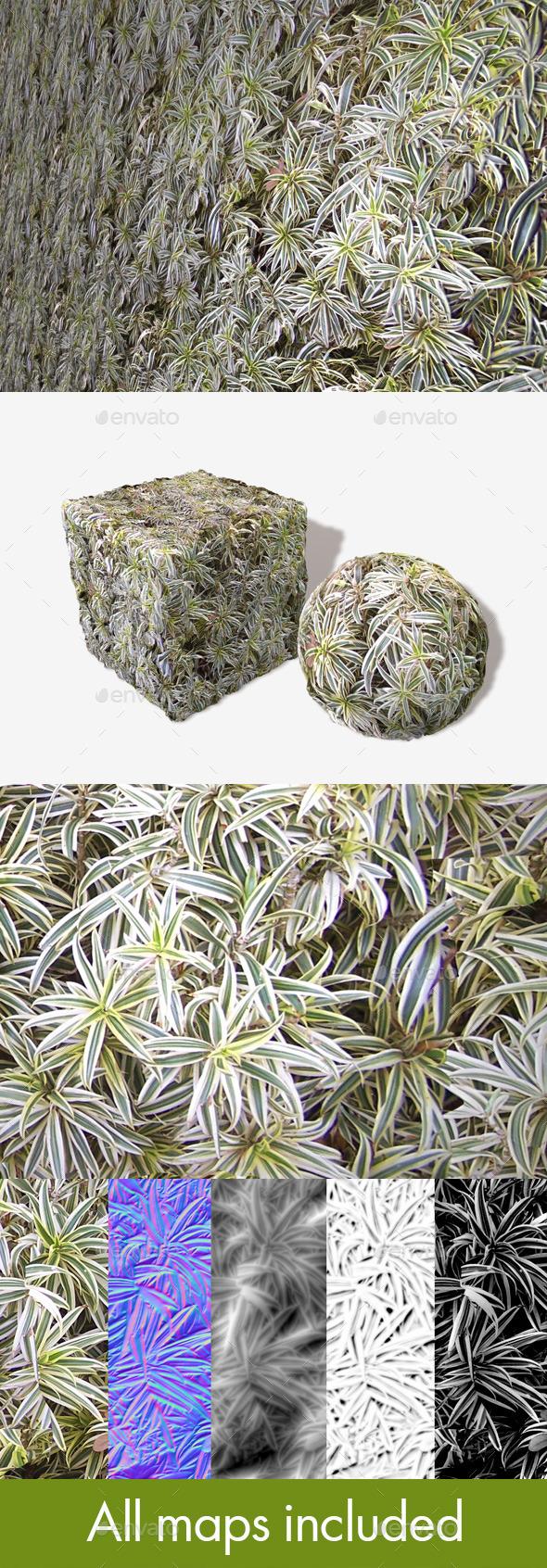 3DOcean Spider Plants Seamless Texture 11239360
