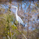 one heron on a tree branch - PhotoDune Item for Sale