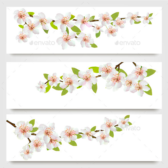 GraphicRiver Three Sakura Branches Banners 11244143