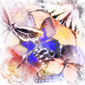 Watercolor Butterfly Background - PhotoDune Item for Sale