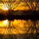 tree reflection in a pond - PhotoDune Item for Sale