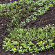 flower bed - PhotoDune Item for Sale