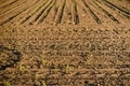 Cultivated land closeup - PhotoDune Item for Sale