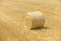 Hay bails on the field - PhotoDune Item for Sale