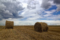 Harvested wheat field with hay rolls and a stormy sky. - PhotoDune Item for Sale